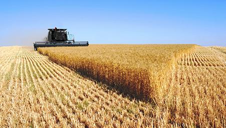 Blue Harvest Agriculture Division